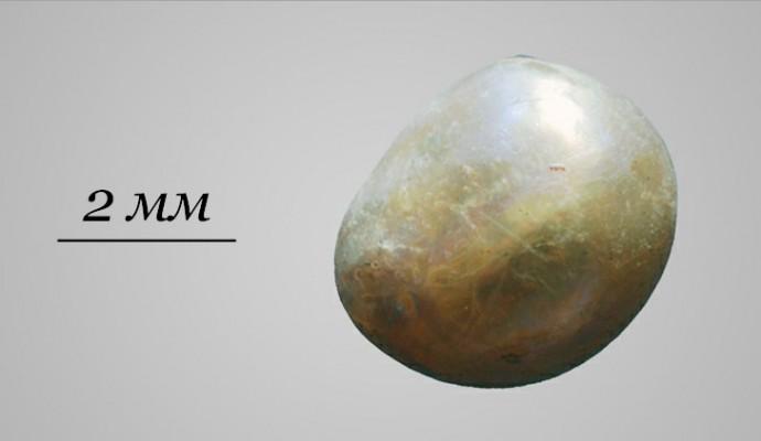 Возраст более 7500 лет, и эта старейшая жемчужина измеряется лишь 1,778 миллиметрами