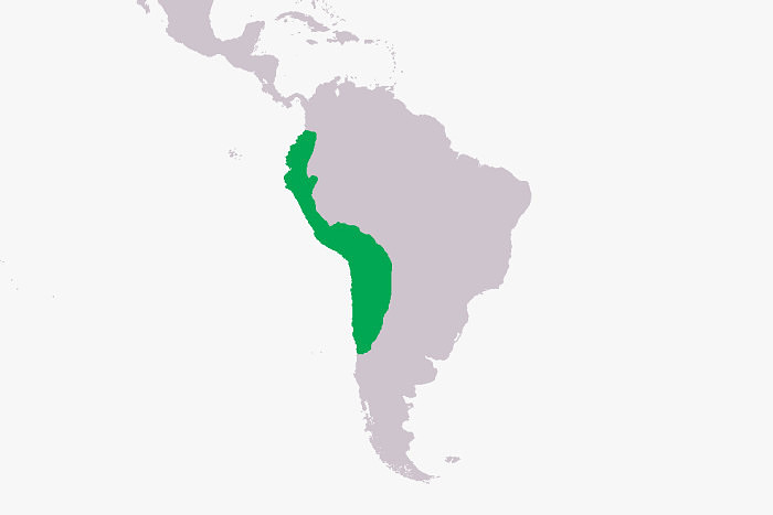 Территория, которая в тот или иной период принадлежала империи инков